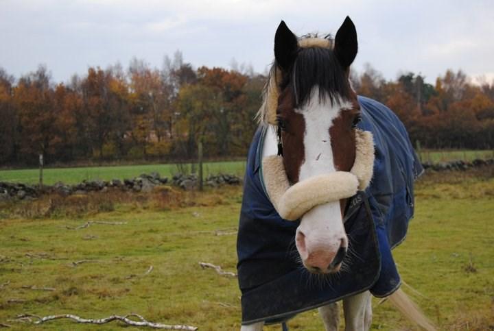 örter till häst